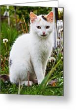 White Cat Sitting Greeting Card