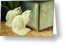 White Cats Watching Goldfish Greeting Card by Arthur Heyer