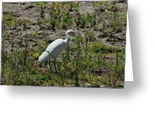 White Cattle Egret Greeting Card