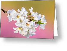 White Cherry Blossoms Against A Pink And Gold Background Greeting Card