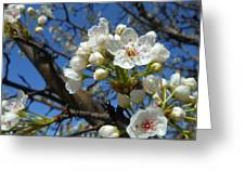 White Blossoms Blooming Greeting Card