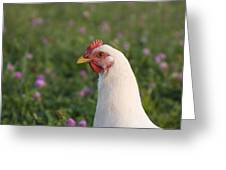 White Chicken Greeting Card
