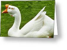 White Chinese Goose Greeting Card