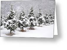 White Christmas At The Christmas Tree Farm Greeting Card