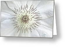 White Clematis Flower Garden 50121b Greeting Card