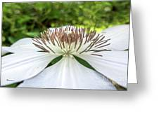 White Clematis Flower Garden 50146 Greeting Card