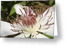 White Clematis Henryi Greeting Card