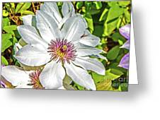 White Clematis Yellow And Purple Throat Greeting Card