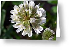 White Clover Greeting Card
