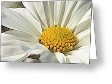 White Cosmos Dream  Greeting Card