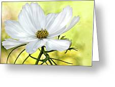 White Cosmos Floral Greeting Card