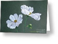 White Cosmos Greeting Card
