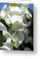 White Creamy Peaceful Greeting Card