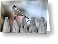 White-crowned Sparrow 2 Greeting Card
