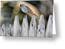 White-crowned Sparrow 3 Greeting Card