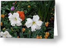 White Daffodills Greeting Card