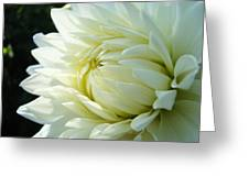 White Dahlia Flower Art Print Canvas Floral Dahlias Baslee Troutman Greeting Card