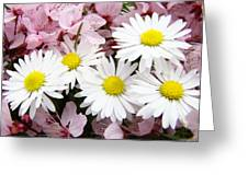 White Daisies Flowers Art Prints Spring Pink Blossoms Baslee Greeting Card