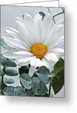 White Daisy Greeting Card