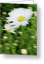 White Daisy Digital Oil Painting Greeting Card