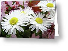 White Daisy Floral Art Print Canvas Pink Blossom Baslee Troutman Greeting Card