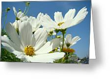 White Daisy Flowers Fine Art Photography Daisies Baslee Troutman Greeting Card
