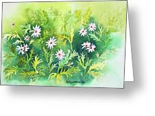 White Daisys Greeting Card