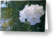 White Desert Flowers Greeting Card