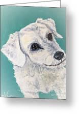 White Dog Greeting Card