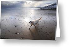 White Dog Greeting Card