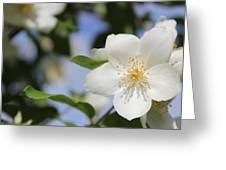 White Dogwood Greeting Card