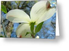 White Dogwood Flower Art Prints Blue Sky Baslee Troutman Greeting Card