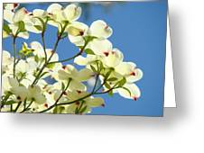 White Dogwood Flowers 1 Blue Sky Landscape Artwork Dogwood Tree Art Prints Canvas Framed Greeting Card