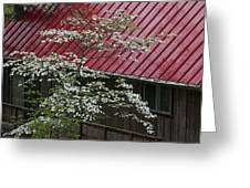 White Dogwood In The Rain Greeting Card