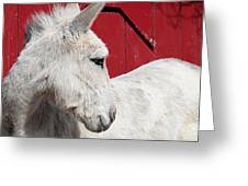 White Donkey, Red Barn Greeting Card