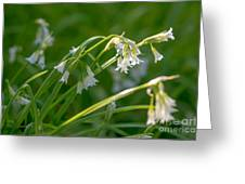 White Drooping Flower Greeting Card