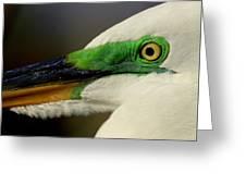 White Egret 1 Greeting Card