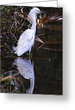 White Egret And Reflection Greeting Card