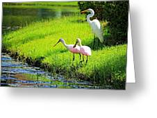 White Egret And Roseate Spoonbills Greeting Card