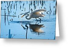 White Egret At Horicon Marsh Wisconsin Greeting Card