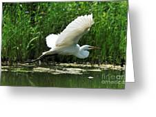 White Egret In Flight Greeting Card