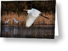 White Egret Flyby Greeting Card