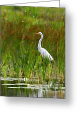 White Egret In Waiting Greeting Card