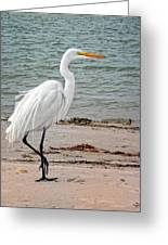 White Egret On Beach Greeting Card