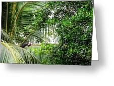 White Faced Capuchin Monkey Costa Rica Greeting Card