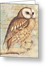 White Faced Owl Greeting Card