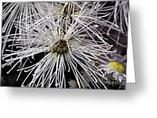 White Flora Greeting Card