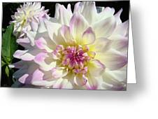 White Floral Art Bright Dahlia Flowers Baslee Troutman Greeting Card