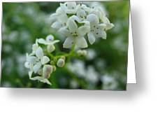 White Floral Cluster Greeting Card