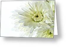 White Floral Greeting Card
